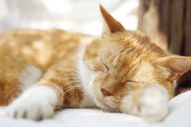 夢占いの猫